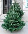 Odvoz vánočních stromků
