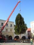 vanocni strom  06.jpg